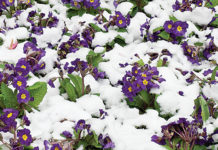 Gardening for winter color in Round Top