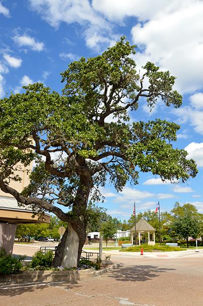 Muster Oak in La Grange