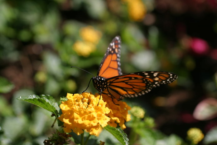 butterflies need habitat